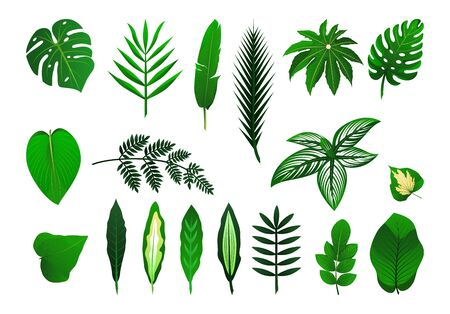 Insieme dell'icona di foglie di piante tropicali differenti. Palma, mostro, banana. Illustrazione vettoriale isolato. Come modello per la progettazione grafica, motivo, carta da parati per il web