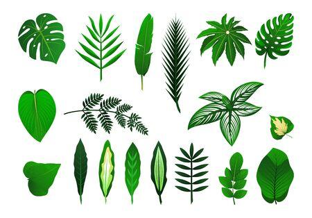 Zestaw ikon różnych roślin tropikalnych liści. Palma, potwór, banan. Ilustracja wektorowa na białym tle. Jako szablon do projektowania graficznego, wzoru, tapety na stronę internetową