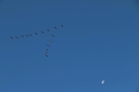 pajaros volando: Aves volando en el cielo azul Foto de archivo