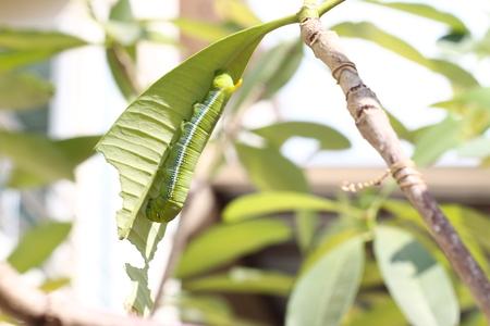 oruga: Caterpillar Foto de archivo