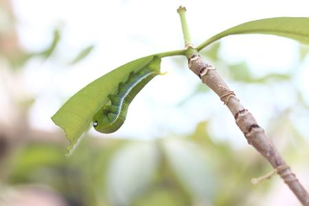 caterpillar: Caterpillar Foto de archivo