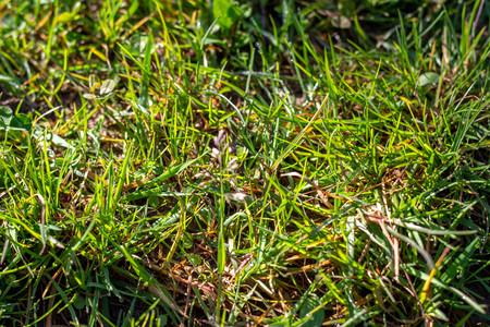 Green, bright grass close up. Texture of green grass on a summer day. Natural concept. Banco de Imagens