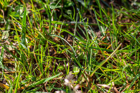 Green, bright grass with dew drops close-up. Texture of green grass on a summer day. Natural concept. Banco de Imagens