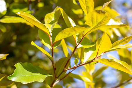 Leaves on the branches of trees. Foliage close up. Natural concept.