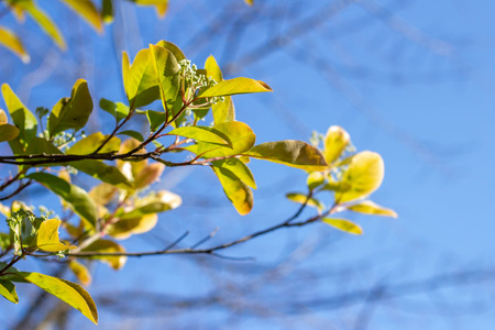 Foliage close up. Leaves on the branches of trees. Natural concept.