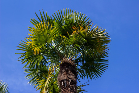Palm tree, photographed from below. Palm tree against the blue sky. Tropical concept. Banco de Imagens