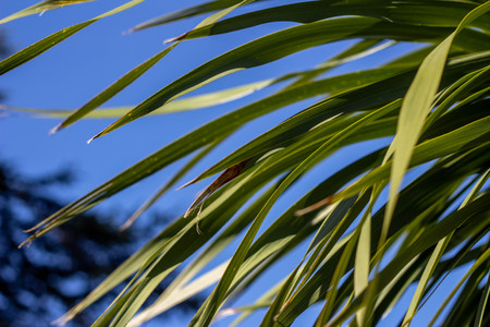Palm leaves against the blue sky. Summer sunny day. Tropical texture. Banco de Imagens