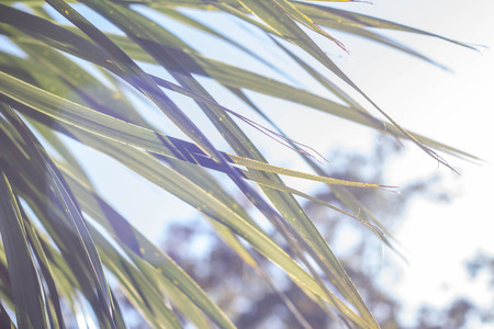 Palm leaves in the sun against the sky. Tropical texture. Summer sunny day. Banco de Imagens