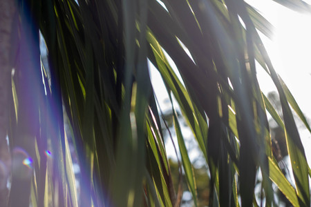 Palm leaves in the sun against the sky. Summer sunny day, colored highlights. A little sun breaks through the leaves. Tropical texture. Banco de Imagens