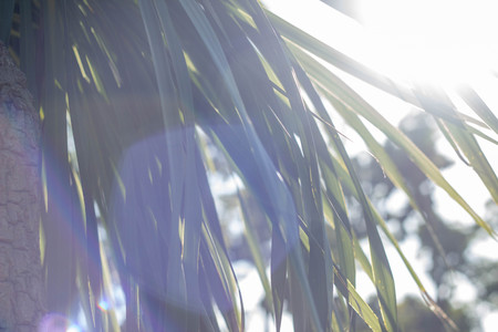 Palm leaves in the sun against the sky. A little sun breaks through the leaves. Summer sunny day, colored highlights. Tropical texture.