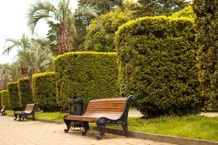 Bench for rest in the park and trimmed shrubs. Place to rest, empty bench.