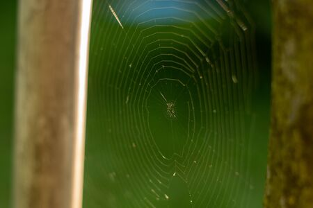 A large spider weaved web between trees. Big round web. Banco de Imagens