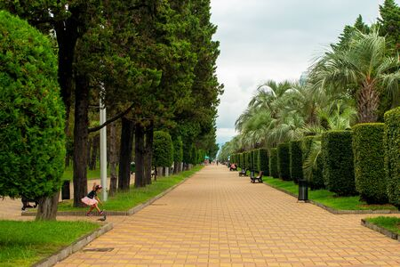 Street in the park for walks and relaxation. Palms, trees, plants.