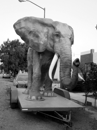 inanimate: Black & white image of a fake life-size African elephant outside a house on a trailer platform; frontal view