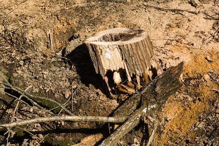The wreckage of the breen and felled tree trunk on the ground