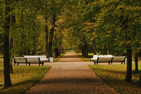 A dirt path extending into the distance of the park is strewn with autumn leaves and surrounded by green lawns leads to white benches set for relaxation in a secluded place in nature. Natural background a place for relaxation and meditation in nature.