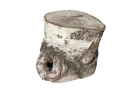 Sawn birch trunk isolated on white background Standard-Bild