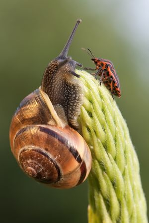 Snail and chinch meet on the green plant photo