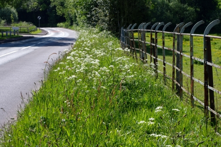 Grasses and meadow flowers on road verge