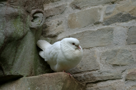 White dove by carving