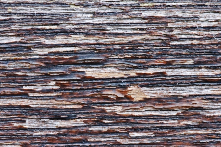 Close up of peeling wood stain texture suitable for background or screen  Ideal for text   copy  Useful for grunge effects  Stock Photo