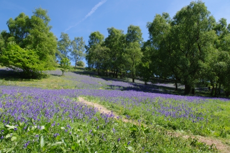 Path amongst bluebells and trees, Malvern