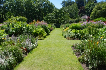 Straight grassy path between summer flower borders