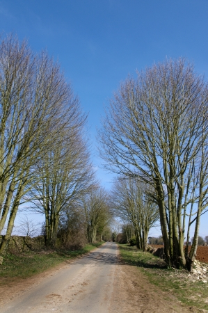 Tree-lined country lane in Wiltshire Stock Photo
