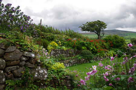 Gardens and windswept tree, Ffald-y-Brenin Christian Retreat Centre, Wales