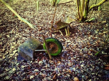 decayed: Broken and decayed wheelbarrow left in woods