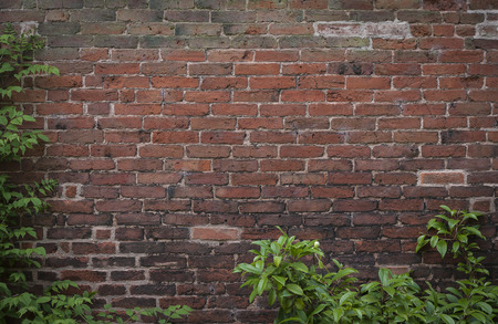 tudor: Background image of old Tudor brick wall framed by foliage. Stock Photo