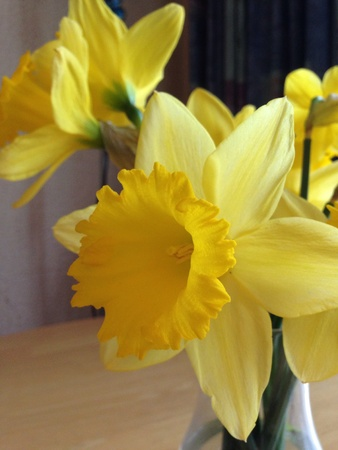 Daffodils in vase indoors
