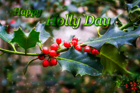 Christmas greetings card design with holly and berries and wording HAPPY HOLLY DAY.