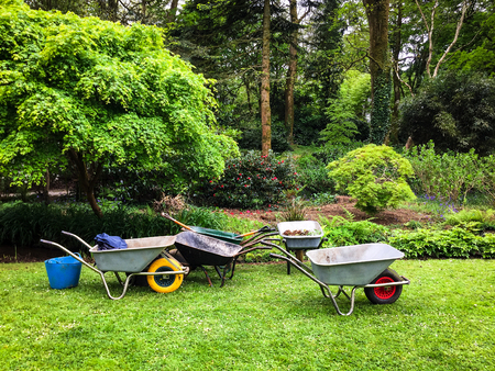 Five wheelbarrows standing ready for use on a garden lawn. Reklamní fotografie