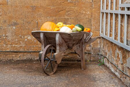Wooden wheelbarrow containing crop of pumpkins and squashes in autumn.