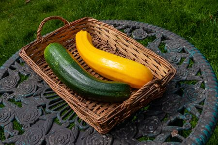 A green courgette and a yellow cougette in basket in garden.