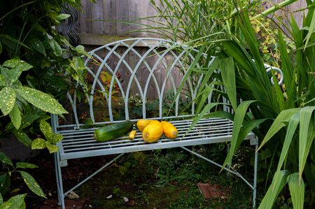 Green and yellow courgettes on garden seat. Stock Photo