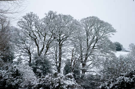 Mature trees in winter snow in typical Worcestershire countryside near Bromsgrove.
