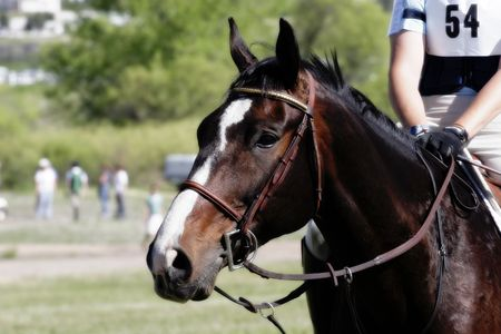 Horse and rider anticipate competing in an equestrian event (shallow focus).