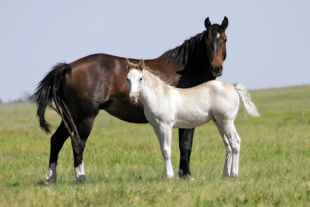 A mare and filly of opposite colors stand in a wild landscape in the American West (shallow focus). 免版税图像