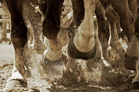 Powerful hooves of draft horses in action as they pull a carriage through sandy soil of an arena.