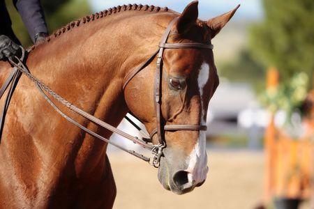 show of hands: Testa di cavallo in Morning Sunlight