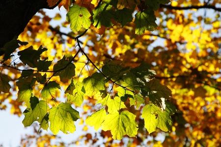 Otoño colorido hojas de árboles con luz solar Foto de archivo - 9013912