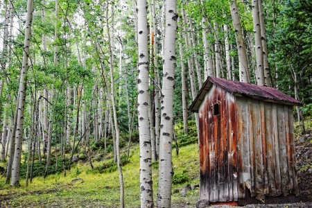 An old outhouse sits among the beauty of a forest of Aspen trees in the Colorado moutains.
