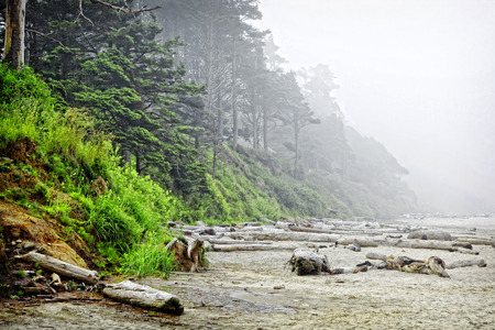 The rugged Oregon coast at the Arcadia State Recreation Site (one mile south of Cannon Beach) lies still in the heavy morning fog and mist of the pacific northwest.