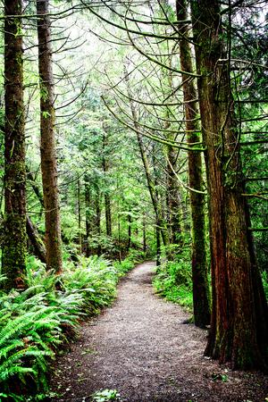 Un camino bien utilizado a través de bosque de crecimiento de edad en el noroeste del pacífico en Oregon, Estados Unidos. Este bosque también se observó para ser un lugar donde la expedición famosa de Lewis y de Clark viajó. Foto de archivo - 82065929