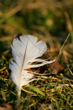 migratory: migratory birds farewells Stock Photo