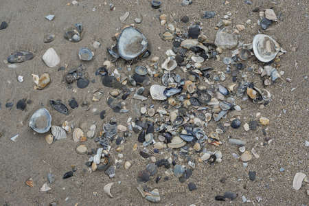 Pile of broken clam and mussel shells on the sand at a beach.