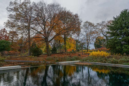 Bronx, New York, USA: Trees and autumn leaves reflected in an outdoor pool at the New York Botanical Garden.