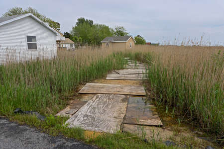 A makeshift boardwalk in a marsh on Tangier Island, Virginia, in the Chesapeake Bay. Since 1850 the island's landmass has been reduced by 67%; the remaining landmass is expected to be lost by 2068.
